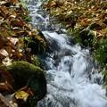 写真: 落ち葉の中の流れ
