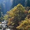 写真: 九頭竜川~~♪