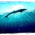 写真: ユラユラ漂って
