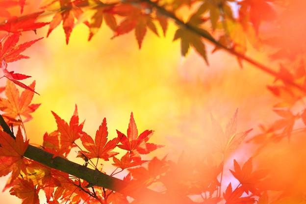 写真: 深まる季節