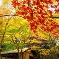 黄葉の森で