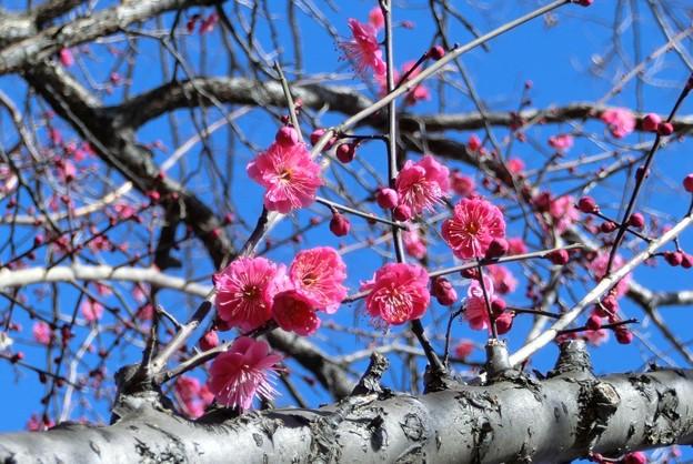 15-02-06 東村山中央公園