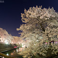 Photos: 夜桜 その2