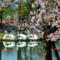 写真: 北国にも春