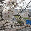 写真: 高處也有春天
