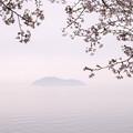 写真: 桜 幽玄