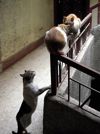 階段の猫2