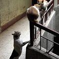 写真: 階段の猫2