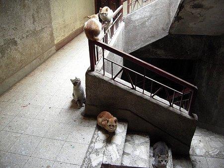 階段の猫1