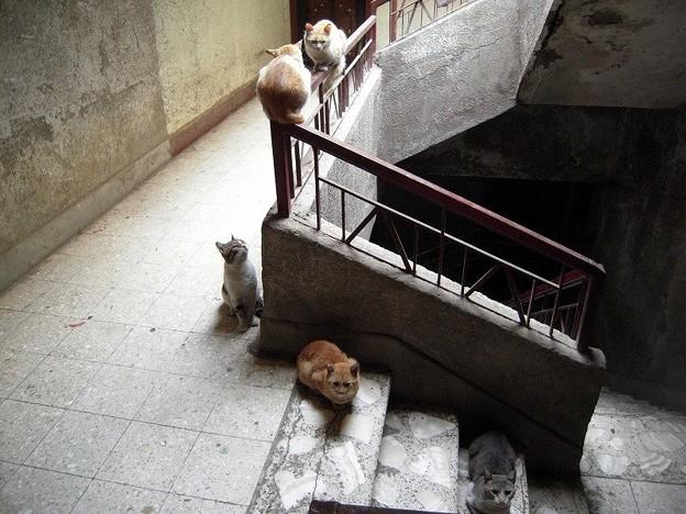 写真: 階段の猫1