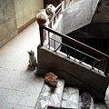 Photos: 階段の猫1