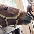 Photos: 笑顔誘うポニー