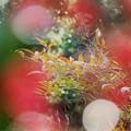 写真: 春のよそほひ