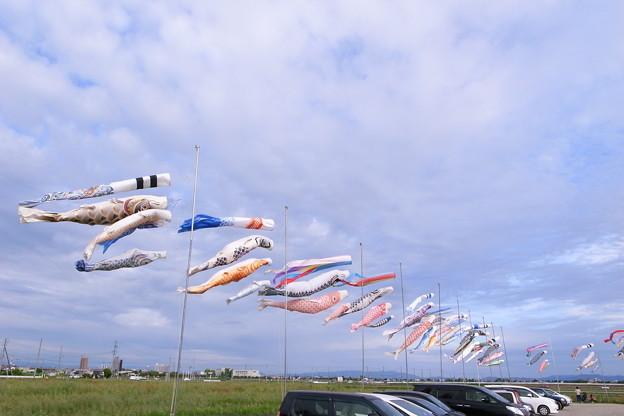 鯉の駐車場