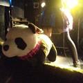 写真: 猫の日にちなんで大熊猫!先...