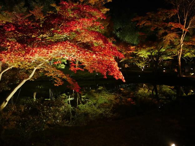 写真: 紅葉 2017 水面に映る紅葉