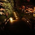 写真: 紅葉 2017 夜間拝観