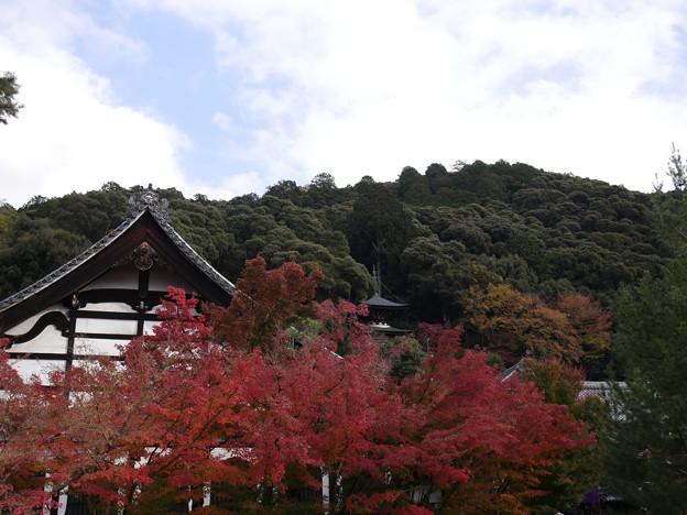 紅葉 2017 永観堂