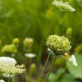 写真: 陰日向に咲く.2