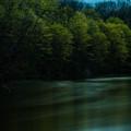 写真: 新緑の杜