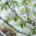 写真: お花見リス