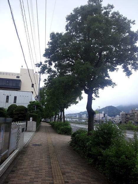 【12143号】Mii合成素材:歩道 平成2906251