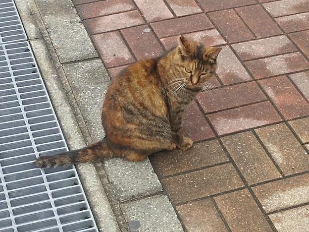 【12585号】猫 平成291017 #NPS2