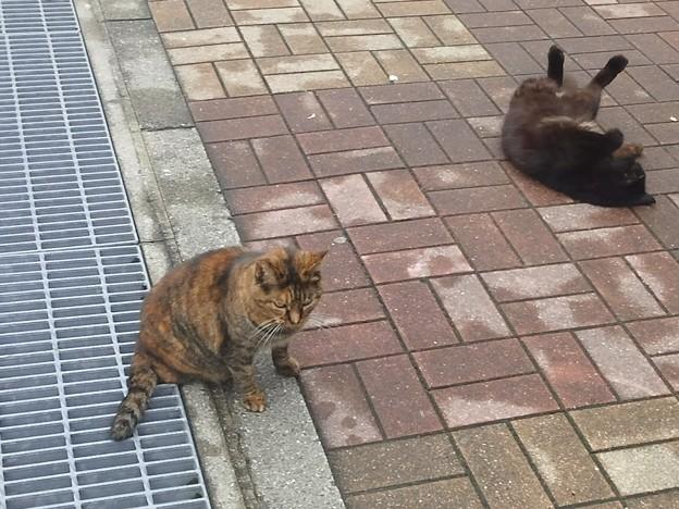 【12585号】猫 平成291017 #NPS3