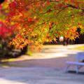 写真: 小春日和の陽だまりで
