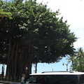 写真: ハワイ・ワイキキ0620