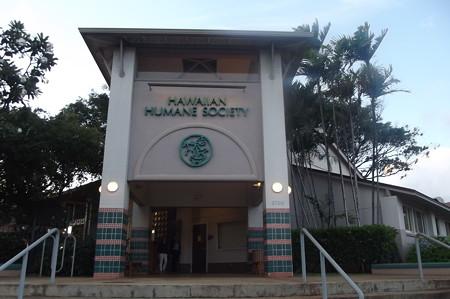 ハワイ・ヒューマンソサエティー0628