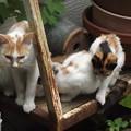写真: 茶ブチ&子ネコ0804