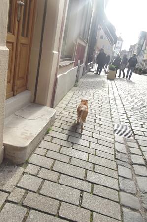 ローテンブルクのネコ1121