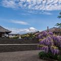 写真: 下之坊_藤の花と富士山-0743