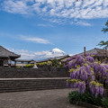 Photos: 下之坊_藤の花と富士山-0743