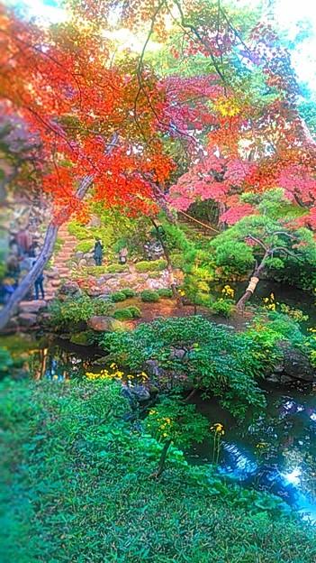 殿ヶ谷戸庭園 2枚目 #いい庭の日  #いい庭  #国分寺