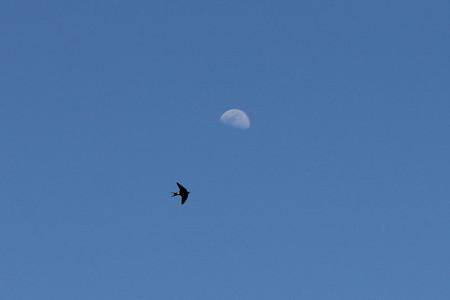 月とツバメ