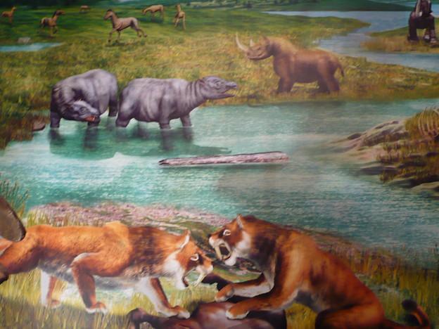 新生代の哺乳動物 - 写真共有サイト「フォト蔵」