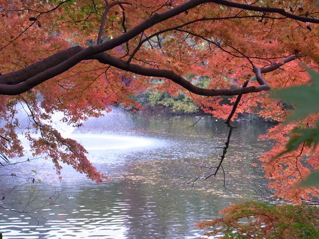「井の頭公園 紅葉」の画像検索結果