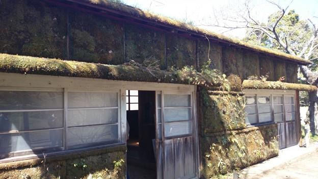 苔に覆われた森ラジオステーション